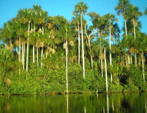 Plantaže palminog ulja
