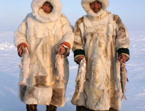 Zašto Inuiti ne pate od bolesti srca?